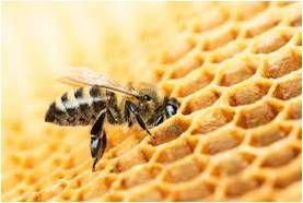 Apiculture - Global Market Outlook (2015-2022)