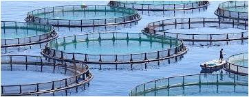 Aquaculture - Global Market Outlook (2015-2022)