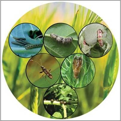 Biopesticides - Global Market Outlook (2015-2022)