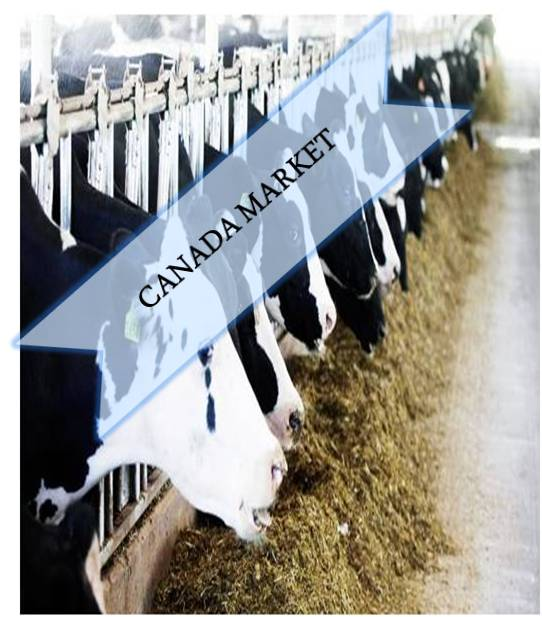 Canada Animal Feed Additives Market Outlook (2014-2022)