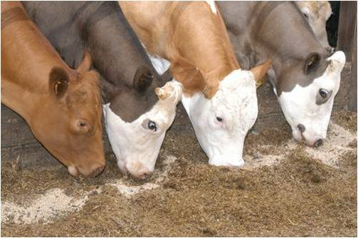 Cattle Feed - Global Market Outlook (2016-2022)