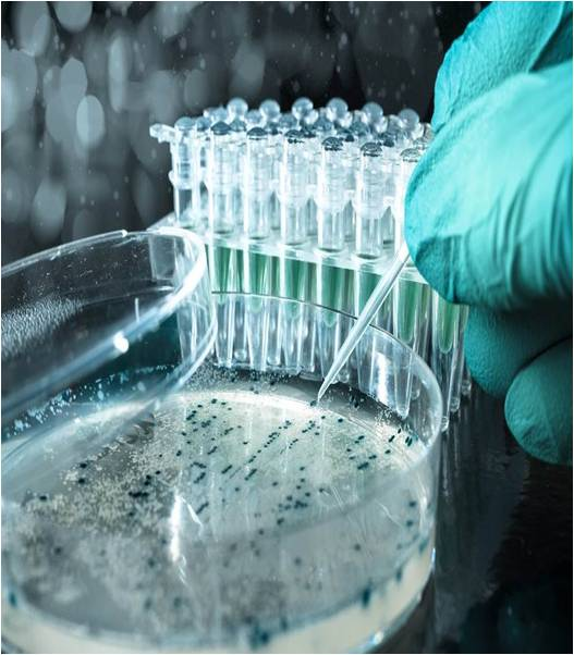 Clinical Microbiology - Global Market Outlook (2017-2023)