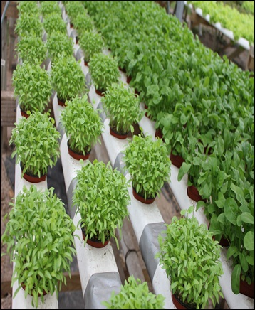 Hydroponics  - Global Market Outlook (2017-2023)