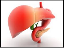 Liver Transplantation - Global Market Outlook (2015-2022)