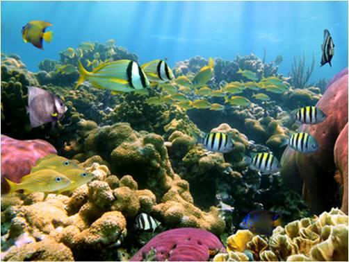 Marine Biotechnology - Global Market Outlook (2016-2022)