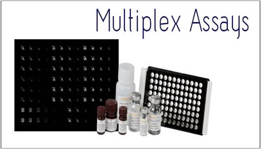 Multiplex Assays - Global Market Outlook (2017-2023)
