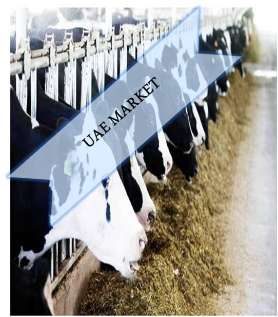UAE Animal Feed Additives Market Outlook (2014-2022)