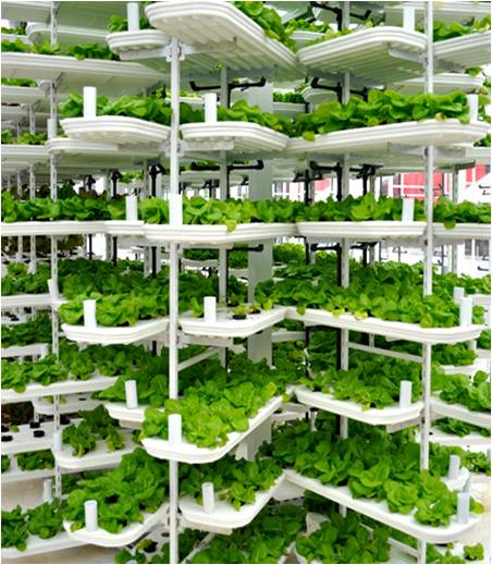 Vertical Farming - Global Market Outlook (2015-2022)