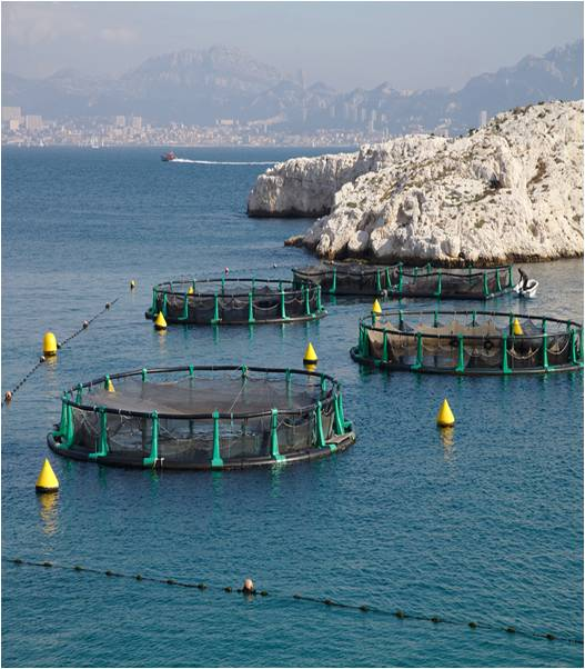 Global Aquaculture And Fisheries Market Outlook (2014-2022)