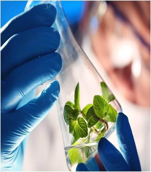 Global Agricultural Biotechnology Market Outlook (2014-2022)