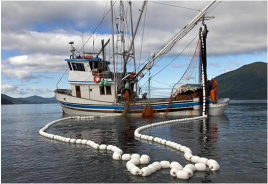 Global Commercial Fishing Industry Market Outlook (2015-2022)