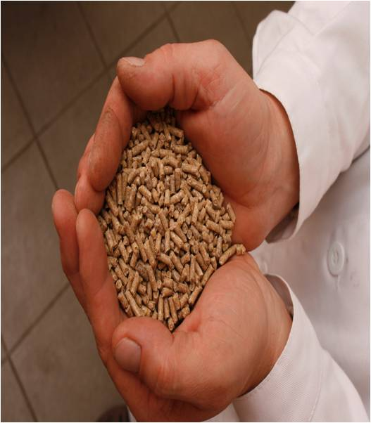 Global Compound Feed Market Outlook (2015-2022)