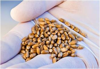 Global Compound Feeds and Additives Market Outlook (2014-2022)