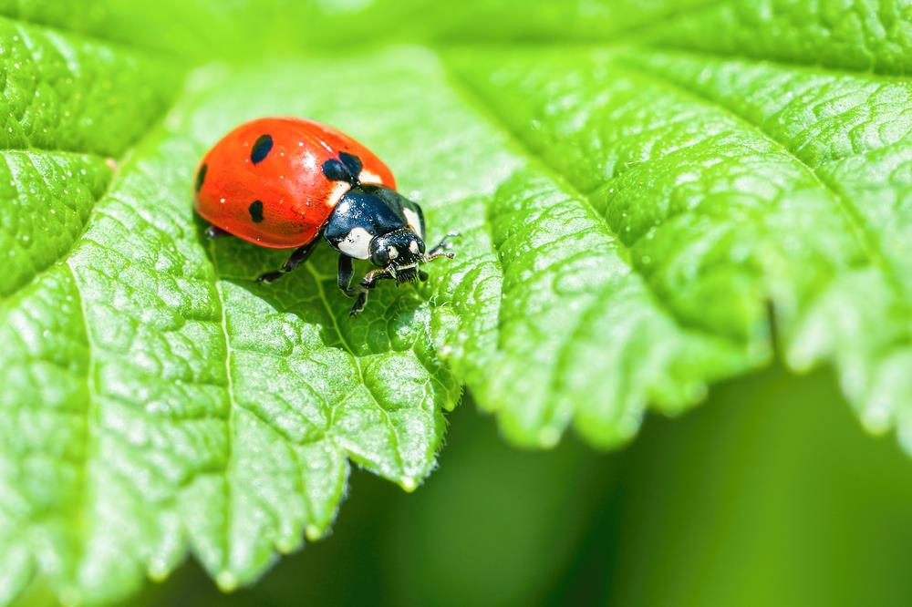 Insect Pest Control - Global Market Outlook (2017-2026)