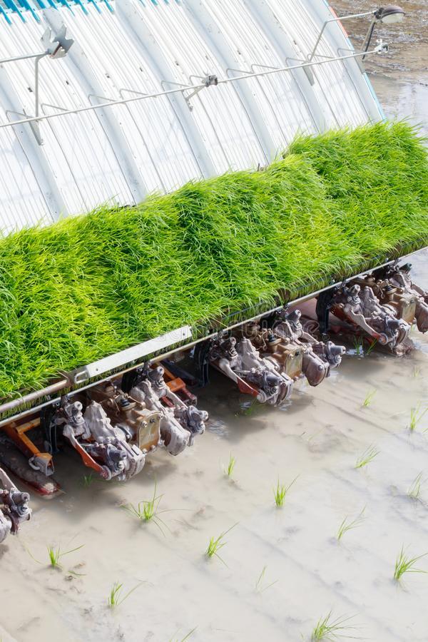 Rice Transplanter Machine - Global Market Outlook (2017-2026)